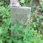Headstone eaten by tree